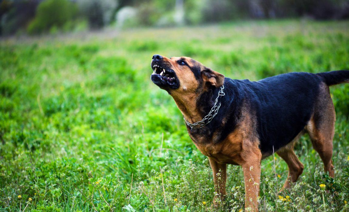 3 Best Dog Repellent Sprays For Keeping