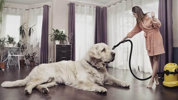 big dog breed grooming