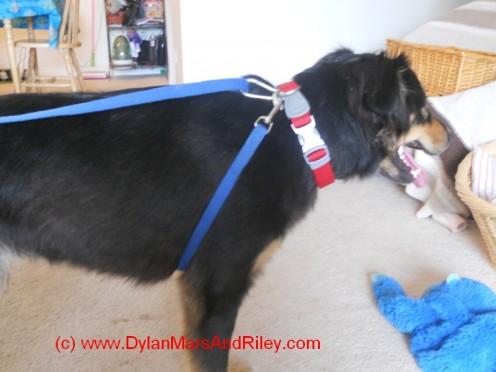 DIY no pull dog harness