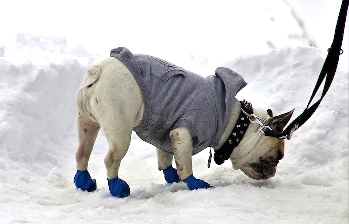 dog booties and coat