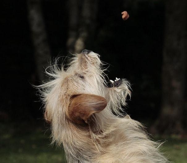 dog getting treat