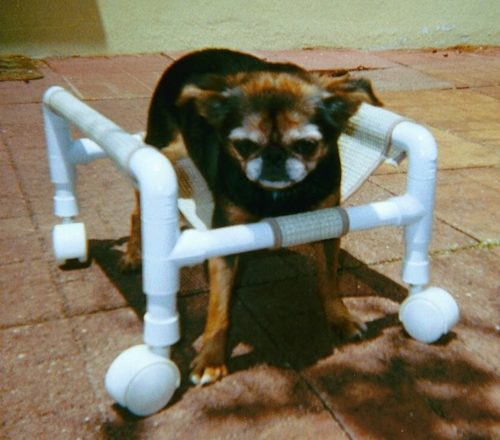 8 Dog Diy Wheelchair Plans Learn How To Build A Dog