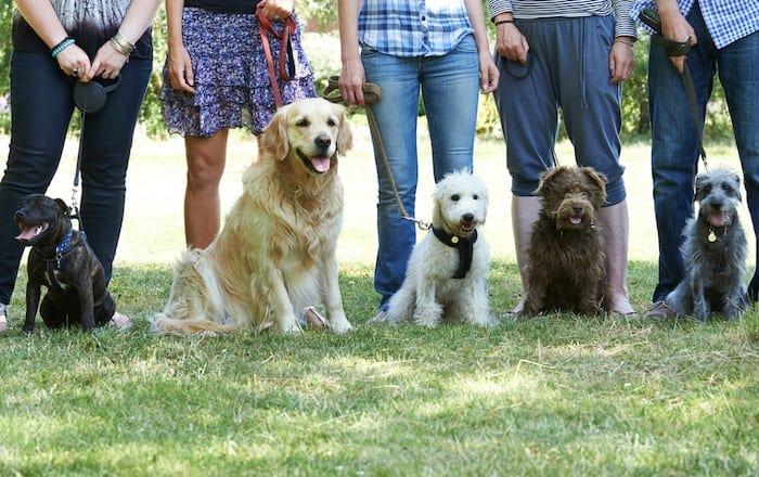 dog training group