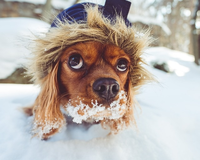 dog snow in mouth
