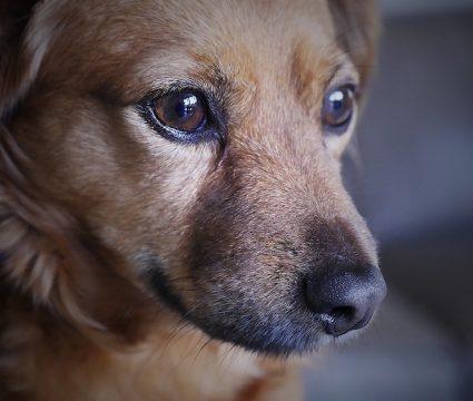 help-dog-gain-confidence