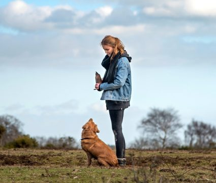 how-to-start-dog-training-course
