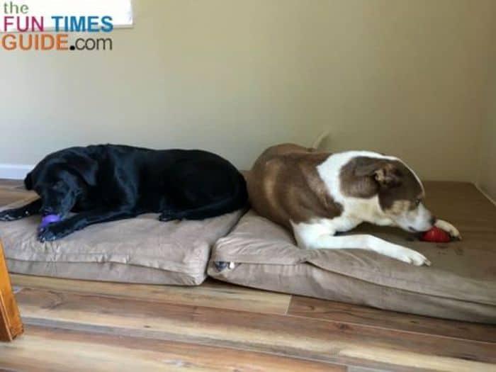 DIY Memory Foam Dog Bed