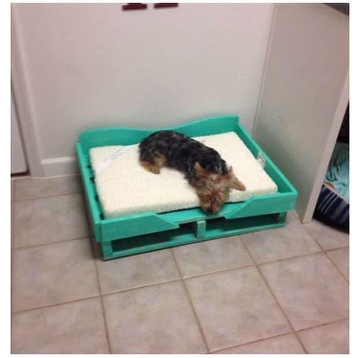 Pallet Dog Bed 3