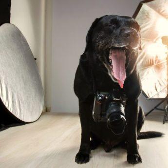 7 Best Dog-Proof Screen Doors [2019 Update]: Dog-Friendly Screens!
