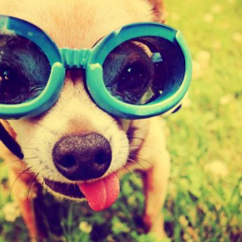 Best Goggles for Dogs