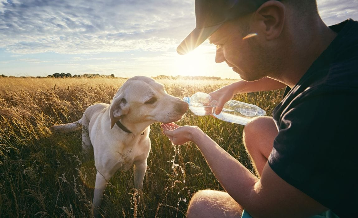 Rehydrating Dogs