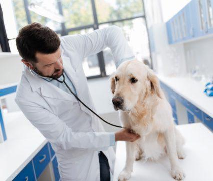 autoimmune disease in dogs