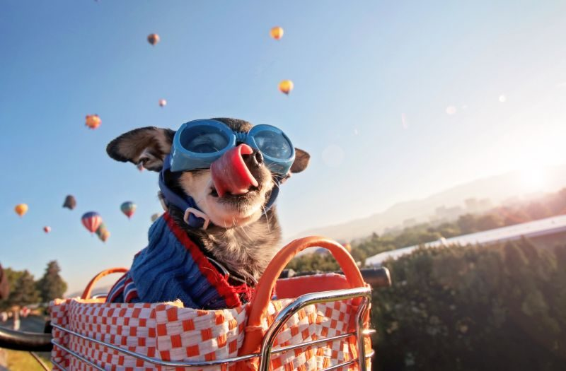 Glasses for Dog eye protection