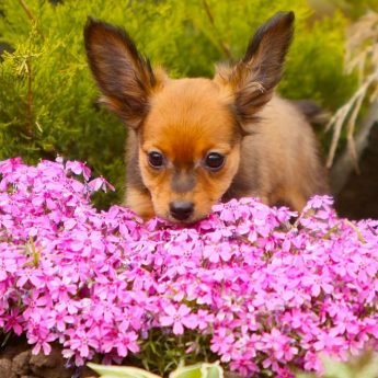 Plants that Repel Dogs