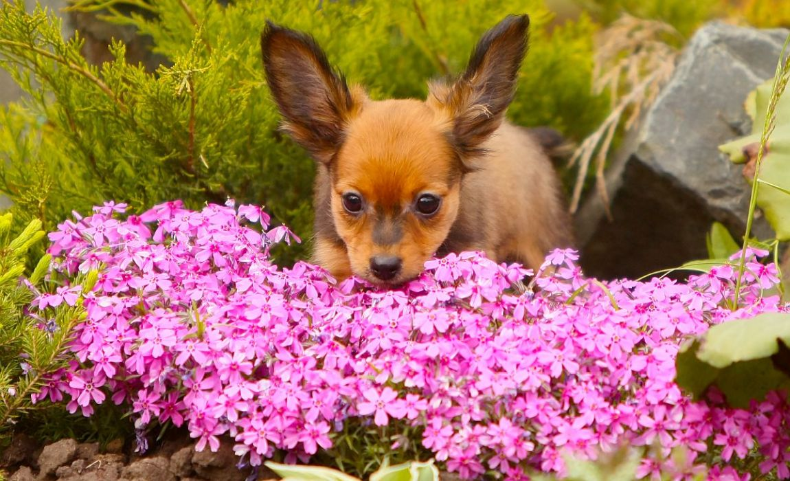Dog Repellent Plants: Can Certain