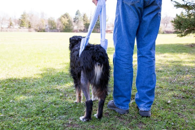 Home Remedy Dog Joint Pain