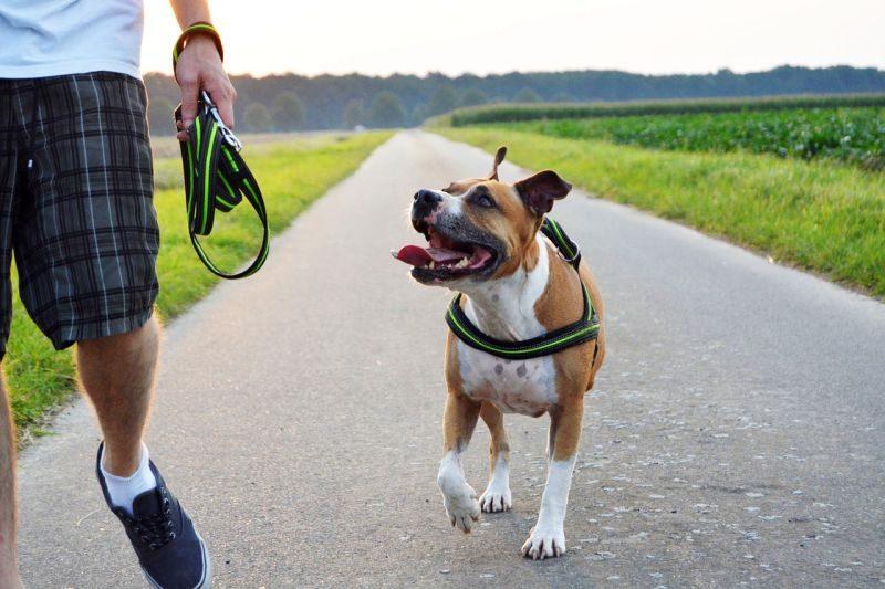 How to Teach a Dog to Heel