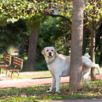Why Dogs Get UTIs