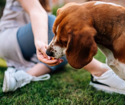best dog food with grains