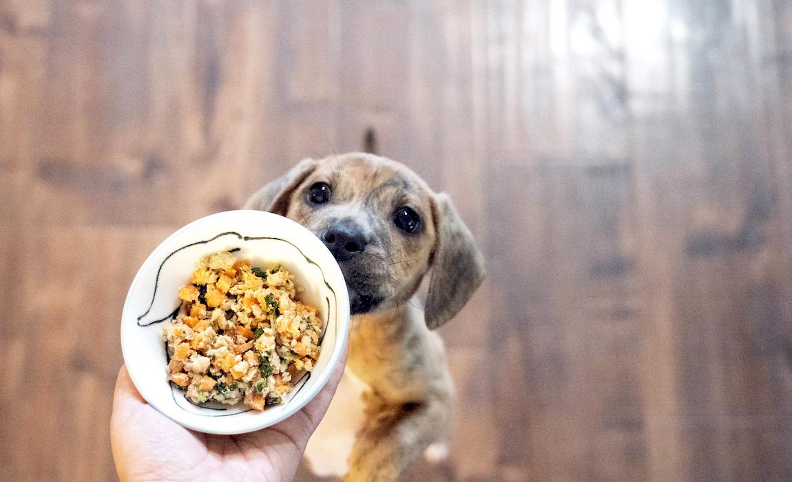 best human grade dog food