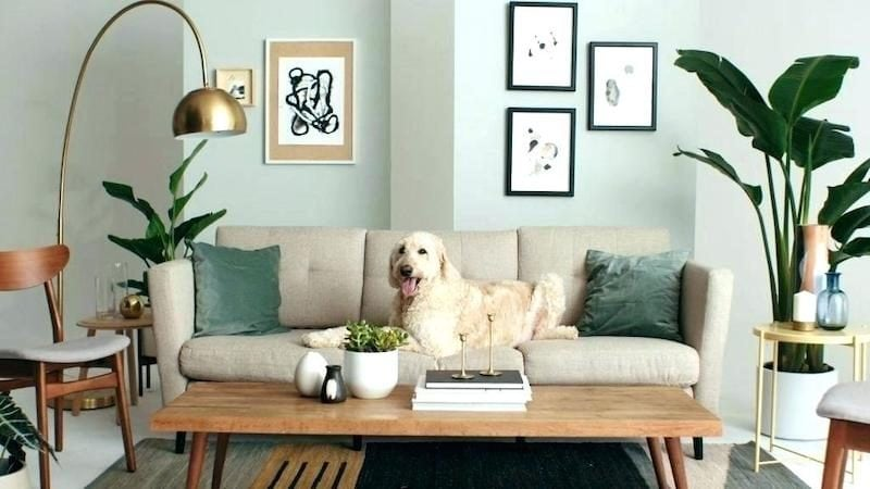 Dog Proof Furniture How To Pick, Dog Proof Furniture