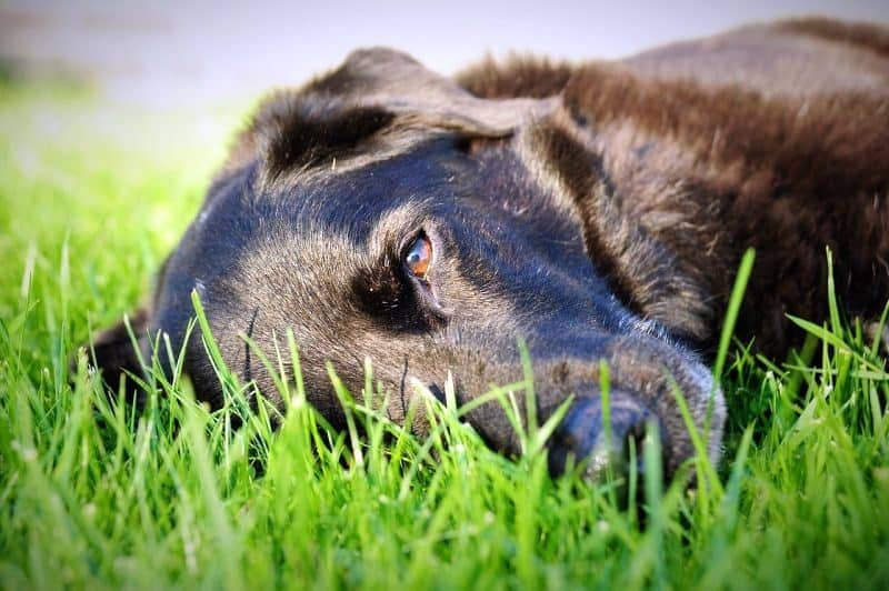 5 Dog Safe Weed Killers [2019 Reviews] + Canine-Friendly