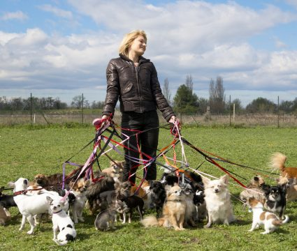 how to start dog walking business