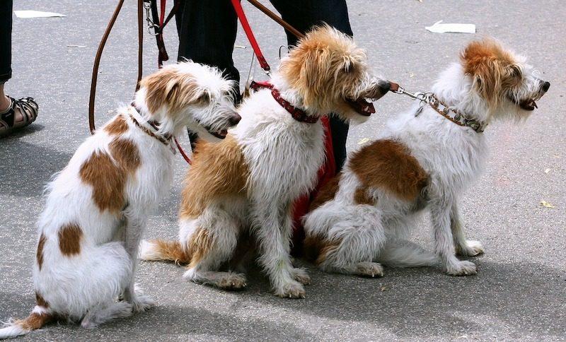 starting dog walking business