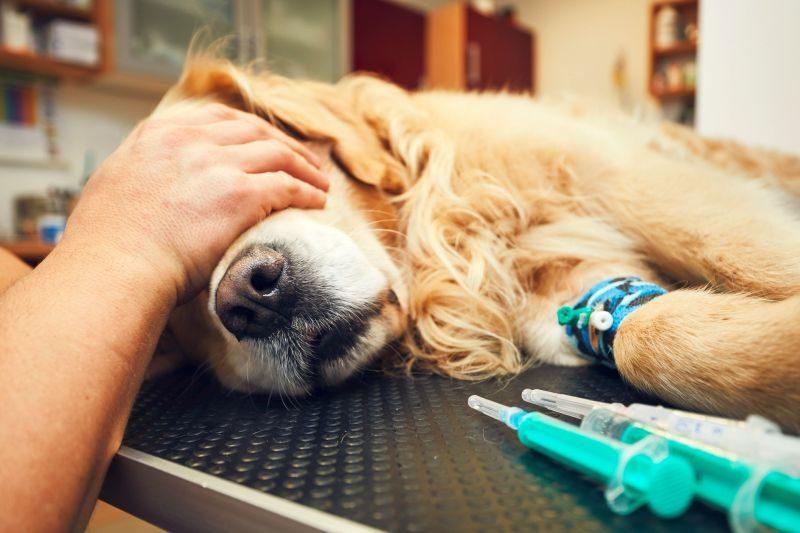 Dog frightened by vet