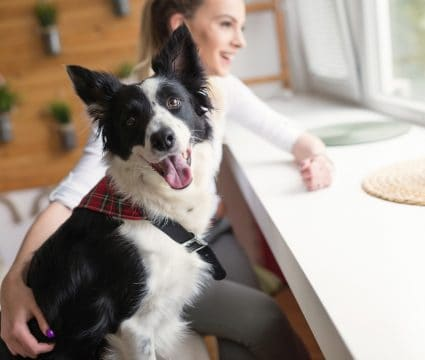 get foster dog adopted