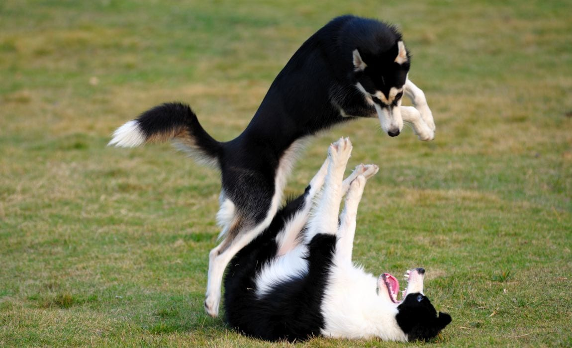 Appropriate Dog Play