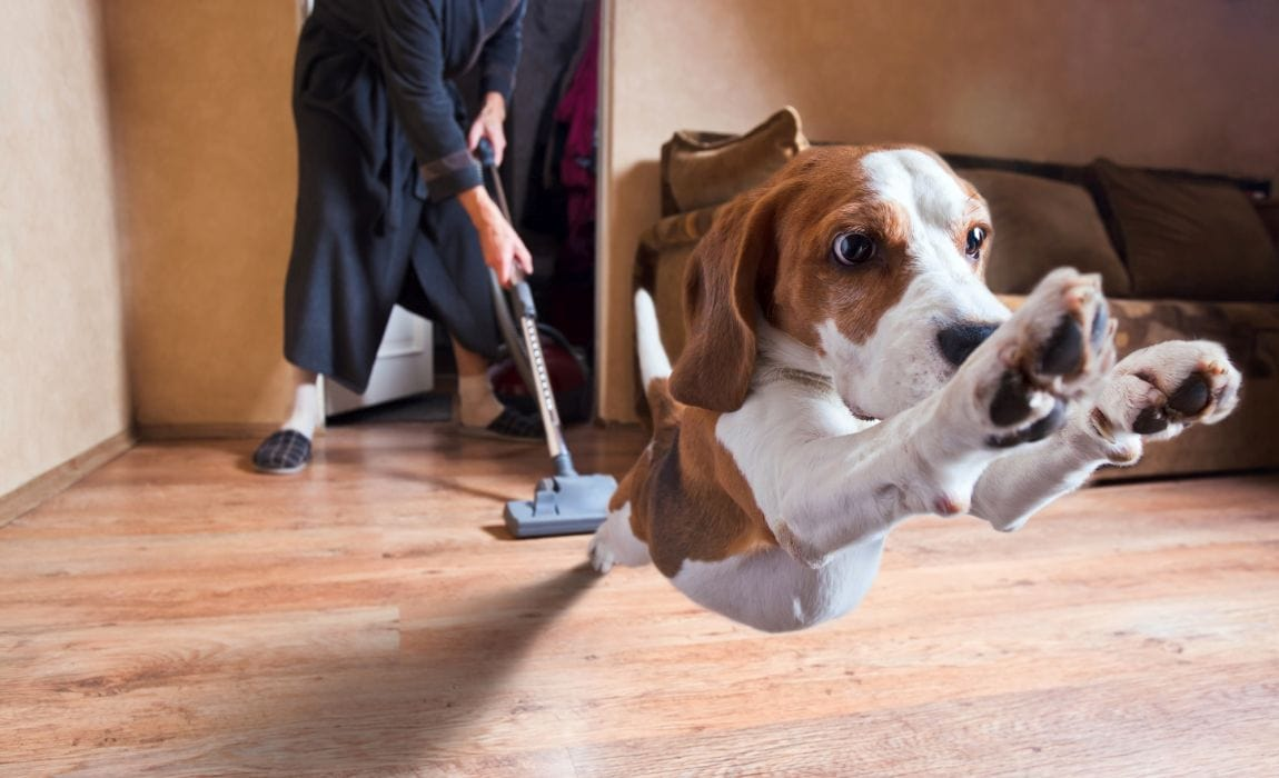 my dog is afraid of the vaccum! what can i do to make it