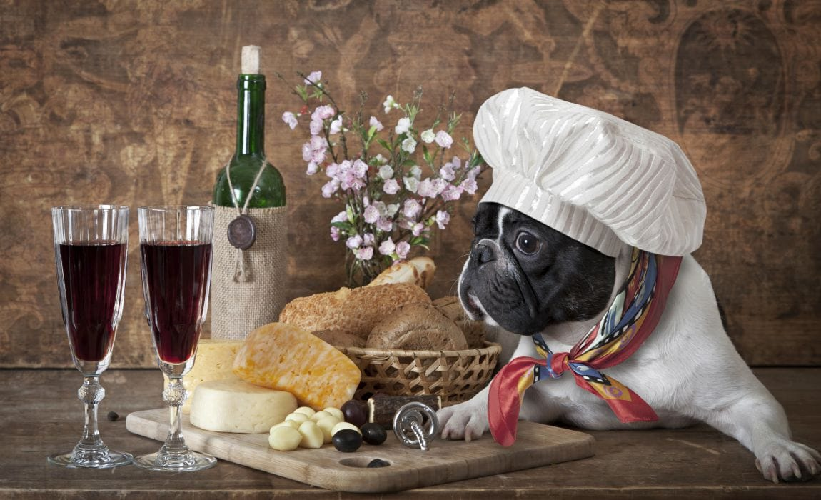 9 Most Expensive Dog Foods Worth The Extra Dollars [2019 ...