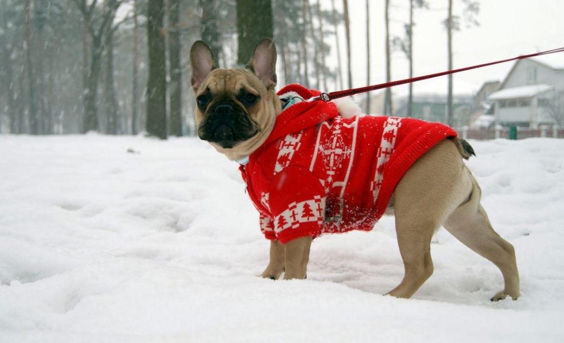 Best Dog Sweaters