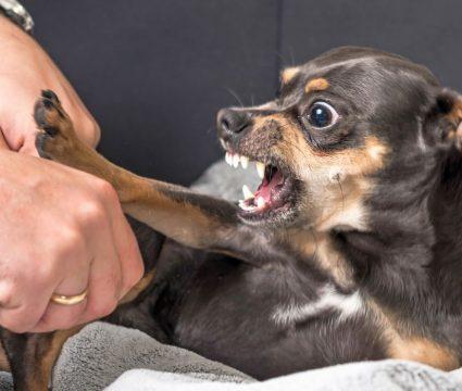 Dog Suddenly Aggressive