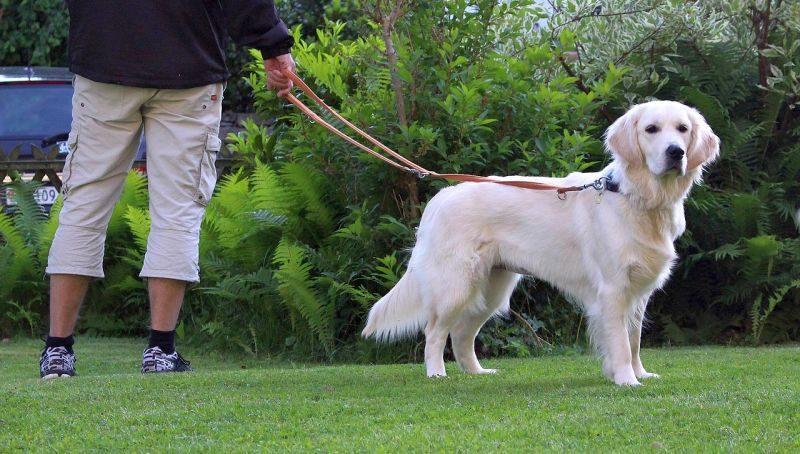 best multi-function leash