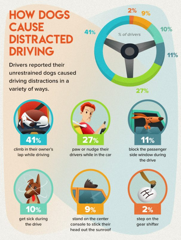 distracted-driving-with-dogs