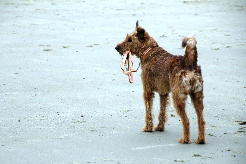 chewproof dog leash