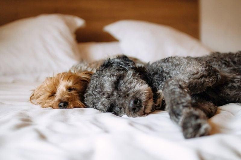 dog hotel amenities