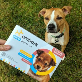 embark-dog-dna-test-review