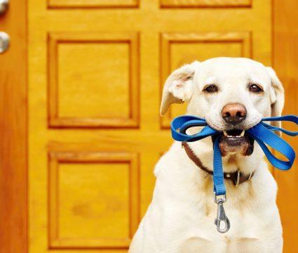 best dog leashes