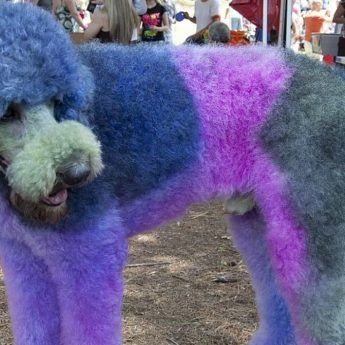 hair dye for dogs