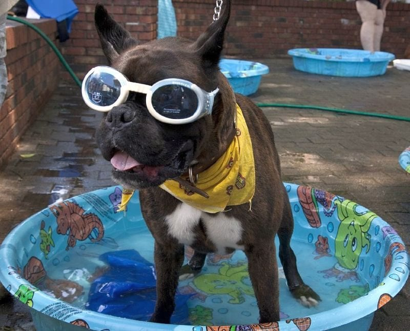 kiddie pool for dogs