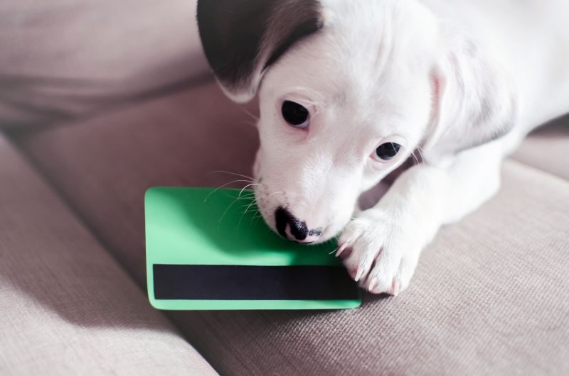 Money-saving dog tips