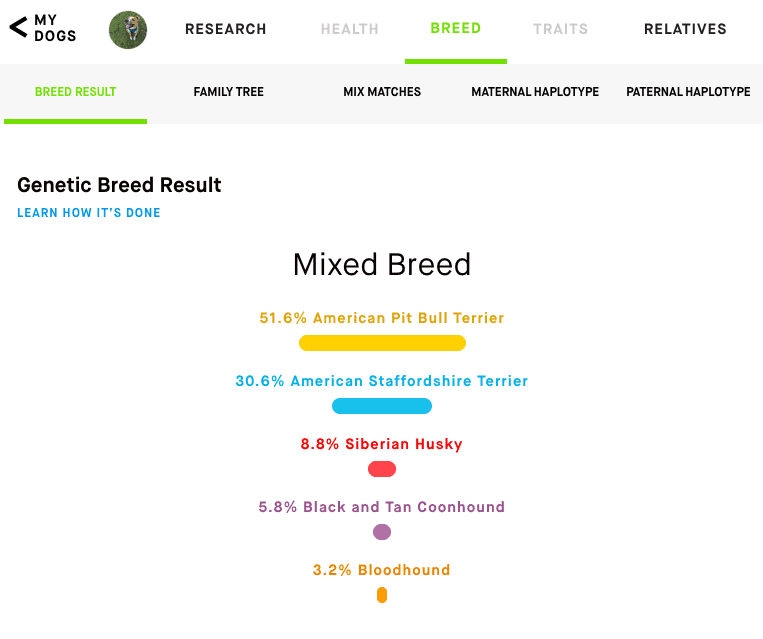 remy embark dna results