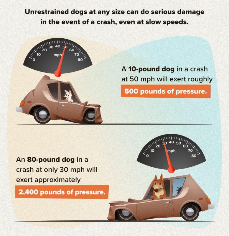 unrestrained-dog-collision