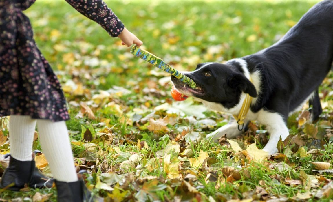 Best Tug Toy for Dogs