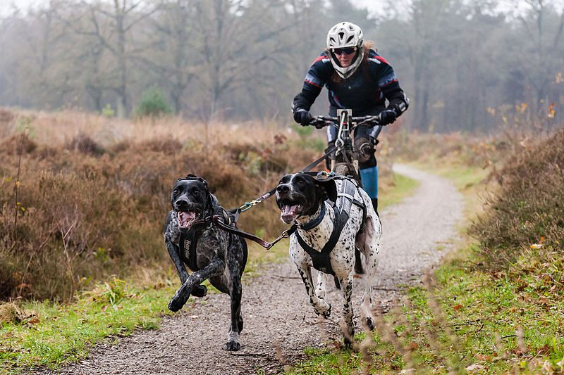 Bikejoring with dog
