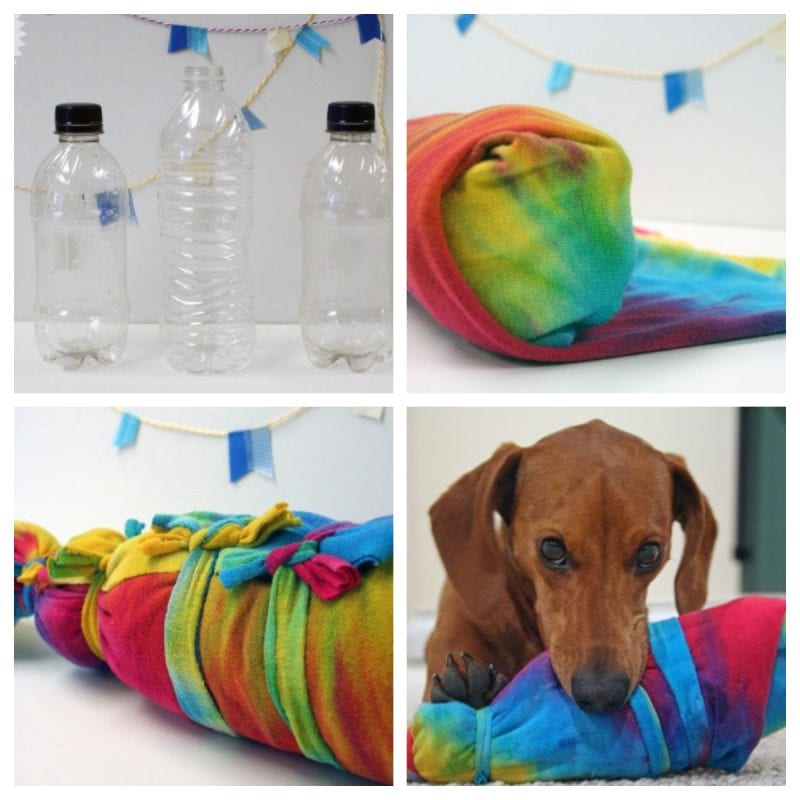 DIY Bottle Toy for Dogs
