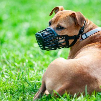 Dog Muzzle DIY